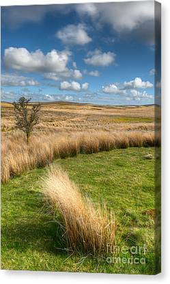 Denbigh Moors Canvas Print by Adrian Evans