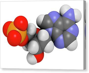 Deoxyadenosine Monophosphate Molecule Canvas Print by Molekuul
