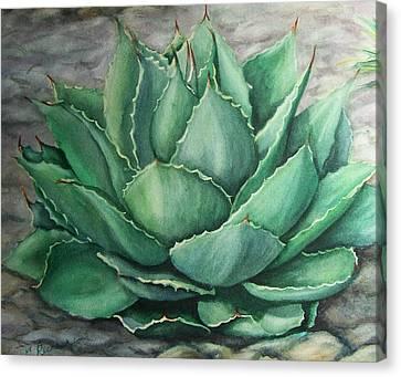 Desert Bloom Canvas Print by Conni  Reinecke