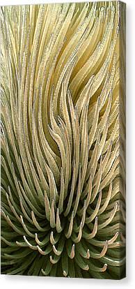 Desert Green Canvas Print by Ben and Raisa Gertsberg