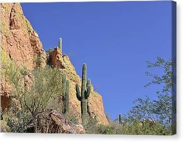 Desert Plants Of The Superstitions Canvas Print by Christine Till