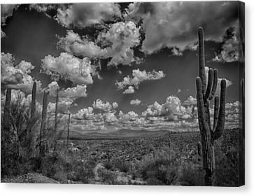 Desert Vista Canvas Print by Judi FitzPatrick