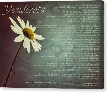 Desiderata With Daisy Canvas Print by Marianna Mills