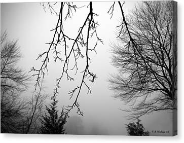 Design By Nature Canvas Print by Brian Wallace