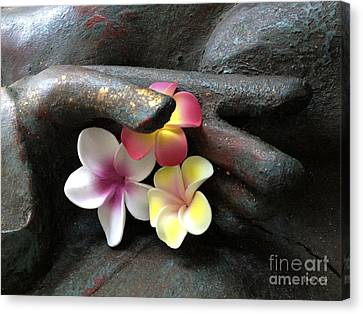 Devotional Canvas Print by Cheryl Young