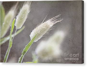 Dew Kissed Morning Canvas Print by Linda Lees