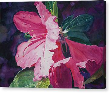 Dewy Azalea Canvas Print by Christopher Reid