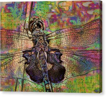 Dfly Canvas Print by Jack Zulli