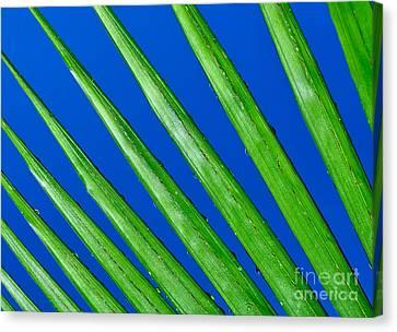 Diagonal Nature Canvas Print by Kaye Menner