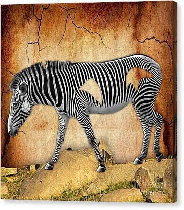 Diamond In The Rough Zebra. Spot The Diamond. Canvas Print by Marvin Blaine