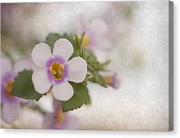 Diana Canvas Print by Faith Simbeck
