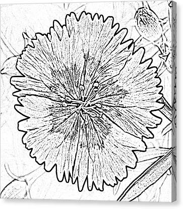 Dianthus Red And White Flower Decor Macro Square Format Black And White Digital Art Canvas Print by Shawn O'Brien
