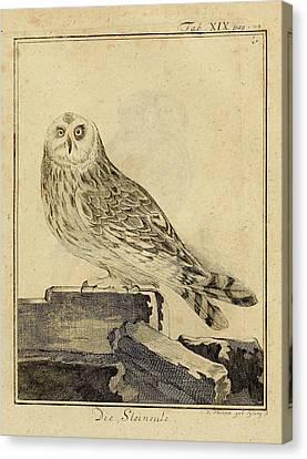 Die Stein Eule Or Church Owl Canvas Print by Philip Ralley