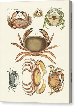 Different Kinds Of Crabs Canvas Print by Splendid Art Prints