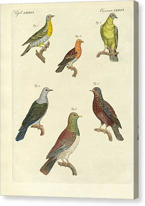 Different Kinds Of Exotic Pigeons Canvas Print by Splendid Art Prints