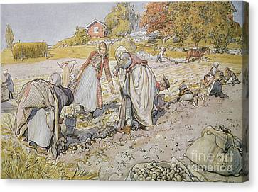 Digging Potatoes Canvas Print by Carl Larsson
