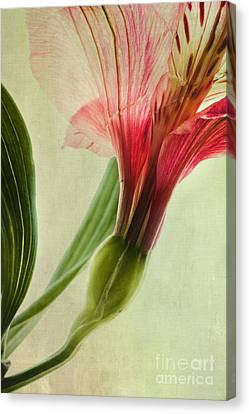 Dim Colours Canvas Print by Priska Wettstein