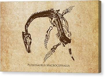 Dinosaur Plesiosaurus Macrocephalus Canvas Print by Aged Pixel