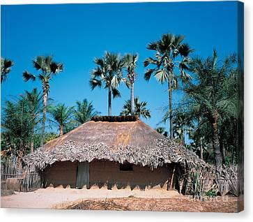 Diolla Hut, Senegal Canvas Print by Adam Sylvester