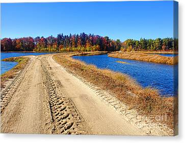 Dirt Road In Marsh Canvas Print by Olivier Le Queinec