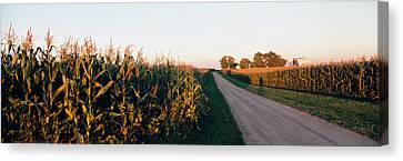 Dirt Road Passing Through Fields Canvas Print by Panoramic Images
