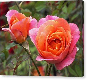 Disneyland Roses Canvas Print by Rona Black