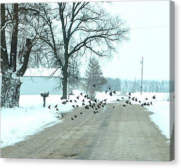 Disturbing The Flock Canvas Print by Julie Dant