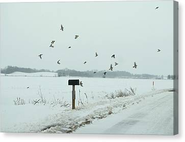 Disturbing The Winter Foragers Canvas Print by Julie Dant