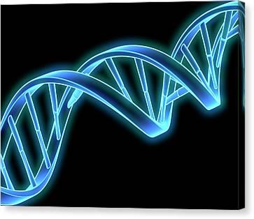 Dna (deoxyribonucleic Acid) Strand Canvas Print by Laguna Design