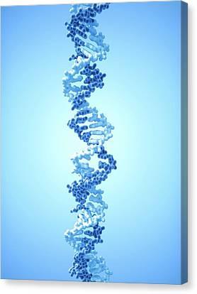 Dna Molecule Canvas Print by Maurizio De Angelis