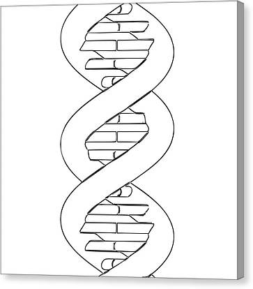Dna Molecule Canvas Print by Russell Kightley