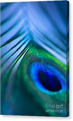 Do You Dream In Colour? Canvas Print by Jan Bickerton