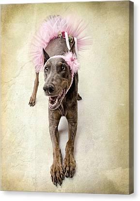 Doberman Ballerina  Canvas Print by Susan Schmitz