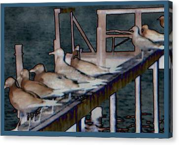 Dock Flock Canvas Print by Becky Sterling
