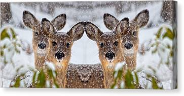 Doe You See Me Canvas Print by Betsy Knapp