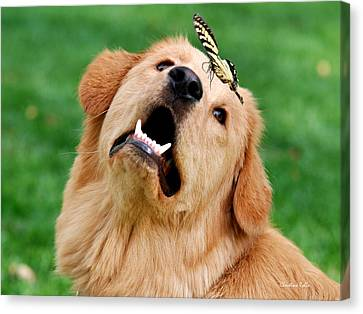 Dog And Butterfly Canvas Print by Christina Rollo