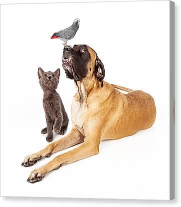 Dog And Cat Looking At A Bird Canvas Print by Susan  Schmitz
