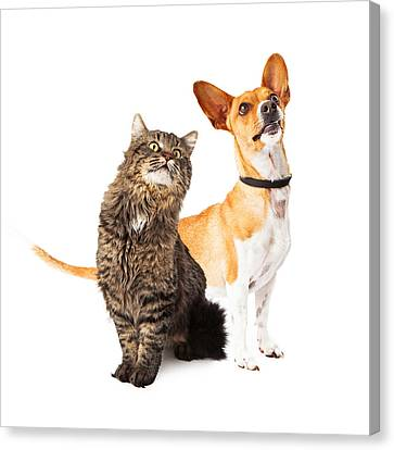 Dog And Cat Looking Up Together Canvas Print by Susan  Schmitz