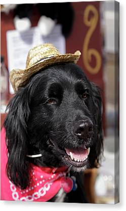 Dog In A Small Town Parade Canvas Print by Julien Mcroberts