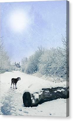 Dog Looking Back Canvas Print by Amanda And Christopher Elwell