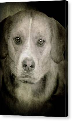 Dog Posing Canvas Print by Loriental Photography