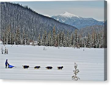 Dog Sled Races Are A Popular Winter Canvas Print by Richard Wright