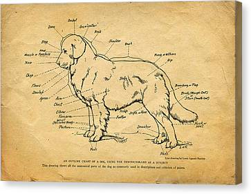 Doggy Diagram Canvas Print by Tom Mc Nemar