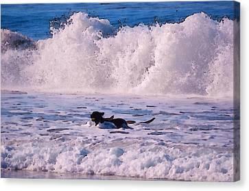 Dogs At Carmel California Beach Canvas Print by Barbara Snyder