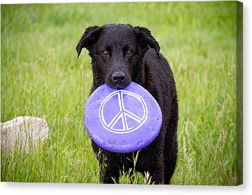 Dogs For Peace Canvas Print by James BO  Insogna
