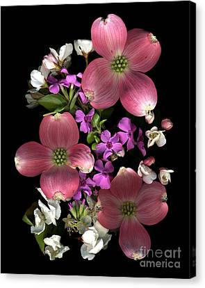 Dogwood Delight Canvas Print by Dale Hoopingarner