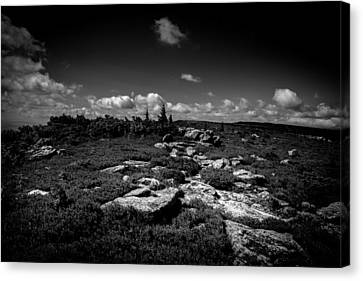 Dolly Sods West Virginia  Canvas Print by Shane Holsclaw