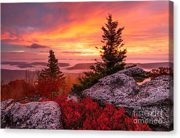 Dolly Sods Wilderness D30018216 Canvas Print by Kevin Funk