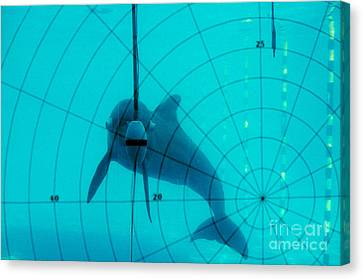 Dolphin Experiment Canvas Print by James L. Amos