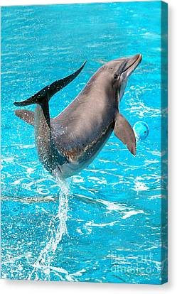 Dolphin Plays Canvas Print by Michal Bednarek